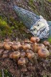 Close up do gnomo que olha cogumelos Fotografia de Stock Royalty Free