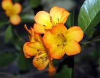 Close up do grupo da flor imagens de stock
