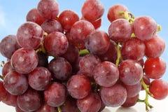 Close up do grupo da uva vermelha no fundo do céu Foto de Stock Royalty Free