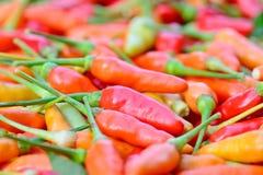 Close up do grupo fresco colorido das pimentas Foto de Stock