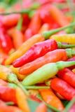 Close up do grupo fresco colorido das pimentas Imagens de Stock