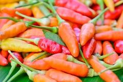 Close up do grupo fresco colorido das pimentas Fotografia de Stock Royalty Free