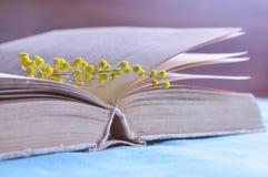 Close up do livro velho aberto com ramo pequeno da mimosa nas páginas - da mola vida ainda nos tons pasteis violetas Imagens de Stock Royalty Free