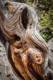 Close up do log queimado e resistido Imagem de Stock Royalty Free