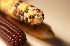 Close-up do milho decorativo fotografia de stock