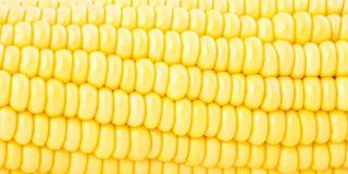 Close up do milho doce para o fundo ou o papel de parede Imagens de Stock