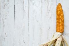 Close-up do milho (Zea maio) Imagens de Stock
