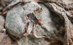 Close up do molde Imagens de Stock Royalty Free