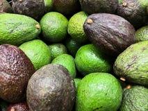 Close-up do montão do abacate de Hass Cultivar referente à cultura norte-americana dos abacates de BIlse do Persea fotos de stock royalty free