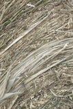 Close up do monte de feno circular do rolo dourado do feno que mostra a textura da palha Fotografia de Stock Royalty Free