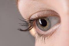 Close up do olho foto de stock