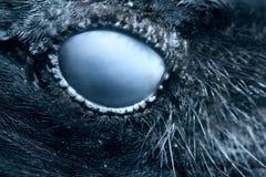 Close-up do olho do corvo, macro, olho do corvo encapu?ado toned fotos de stock royalty free