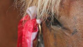 Close up do olho da cabeça de cavalo video estoque
