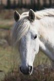 Close up do olho de um cavalo Fotografia de Stock Royalty Free
