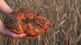 Close-up do pão perfumado no fundo de um campo de trigo Mulher que guarda um grande pão sobre as orelhas maduras do trigo E filme