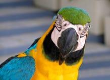 Close-up do papagaio imagem de stock
