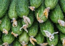 Close-up do pepino Imagens de Stock