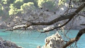 Close-up do ramo de árvore secado no fundo das rochas e do mar Arte Dia quente bonito na praia com árvore murcho sobre filme