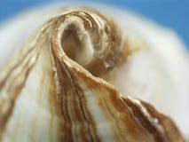 Close up do Seashell Imagem de Stock Royalty Free