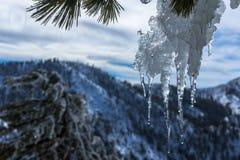 Close up do sincelo que derrete no sol nas montanhas Imagens de Stock