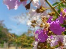 close up do templo de Tailândia do verão do vocação Imagem de Stock