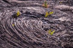 Close up do teste padrão frio da lava com plantas Imagens de Stock Royalty Free