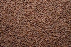 Close-up do trigo mourisco Acima da vista Fotos de Stock
