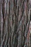 Close up do tronco de árvore imagens de stock