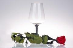Close-up do vidro de vinho com rosa do vermelho Foto de Stock Royalty Free