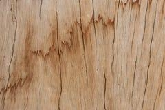 Close up do Woodgrain, log de madeira claro com teste padrão interessante da grão fotografia de stock royalty free