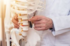 Close up. Doctor is showing vertebrae on skeleton. Close up. Doctor in white gown is showing vertebrae on skeleton stock image