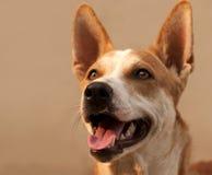 Close-up of dog Stock Photo