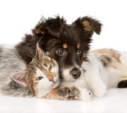 Close-up dog with cat together.  on white background.  Stock Photo