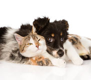 Close-up dog with cat together.  on white background.  Royalty Free Stock Photo