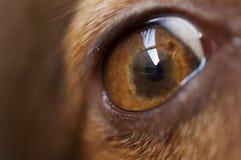 Close-up of a dog eye. Close-up of a brown dog eye Stock Photos