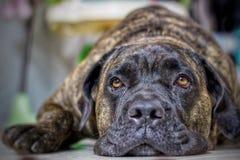 Close up on dog face. Dog face close Royalty Free Stock Image