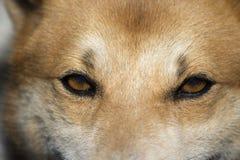 Close up dog face photo Stock Photo