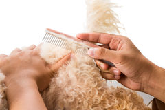 Close up of dog fur combing and de-tangling during grooming Royalty Free Stock Photography