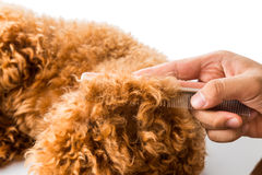 Close up of dog fur combing and detangling during grooming Stock Photos