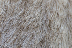 Close up on dog fur Royalty Free Stock Photos