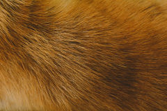 Close-Up dog hair light brown abstract pattern. And background Royalty Free Stock Photography
