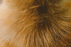 Close-Up dog hair light brown abstract pattern. And background Royalty Free Stock Images