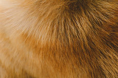 Close-Up dog hair light brown abstract pattern. And background royalty free stock photo