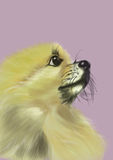 Close up dog head-pomeranian sketching image Royalty Free Stock Image