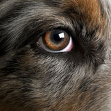 Close up of dog's eye Royalty Free Stock Photography