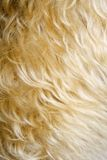Close-up of dog's fur. Royalty Free Stock Photography