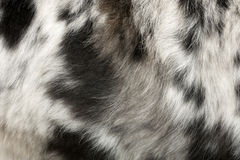 Close up of the dog's fur. Close up of on the dog's fur in front of white background Stock Photo