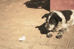 The dog is watching the dried leaves on the floor at temple. Close up The dog is watching the dried leaves on the floor at temple royalty free stock photo