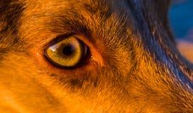 Close up on Dogs Eye Stock Photo