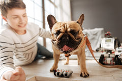 Close up of dogs snout posing on camera Stock Images